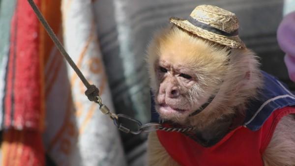 mono circo