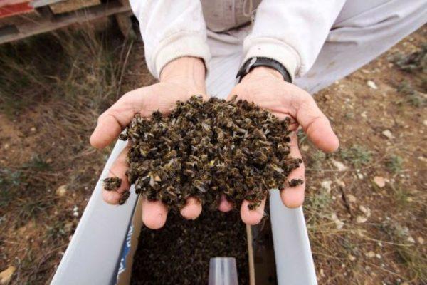 imagen-abejas-cadena-ser